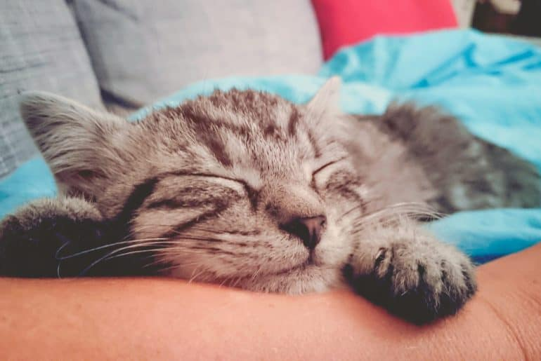 Cat sleeping on person