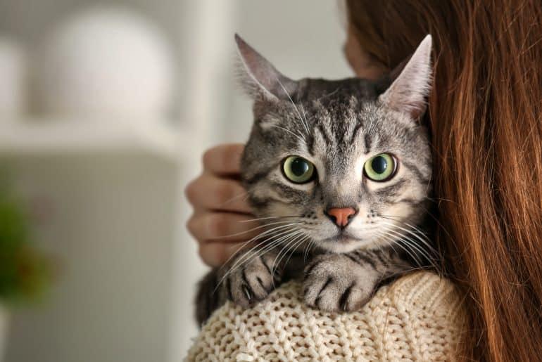 Cat Shoulder