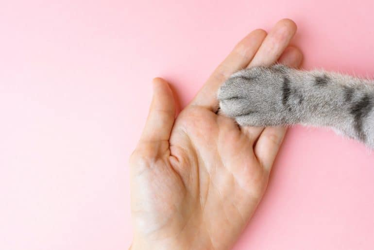 Gray striped cat's paw and human hand on a pink background.