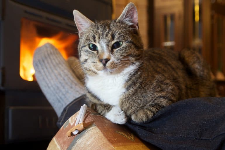feet in stockings with cat by the fireplace