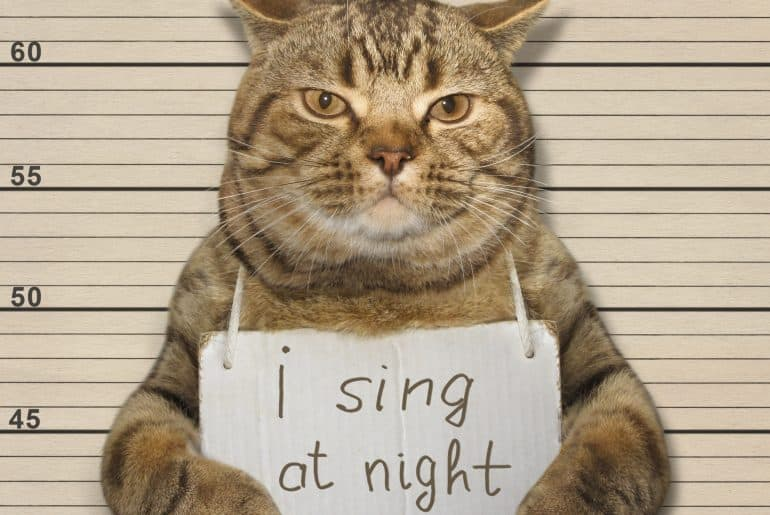 Cat infront of prison height meter