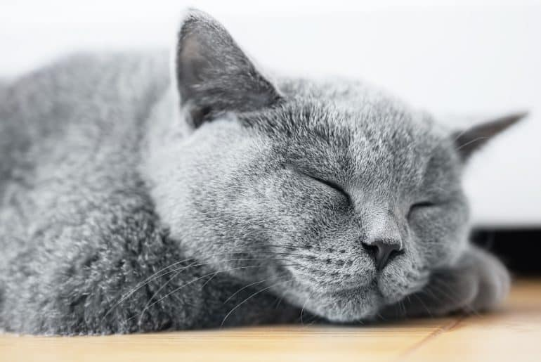 Young cute cat sleeping on wooden floor.