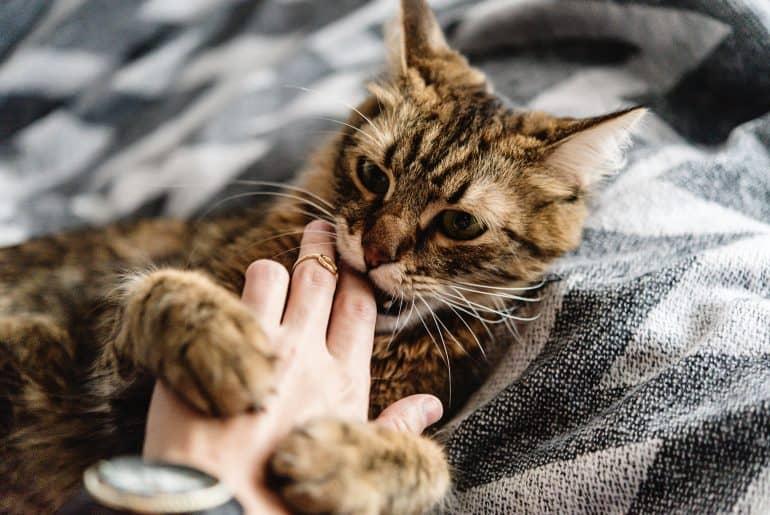 Cat scratches hand