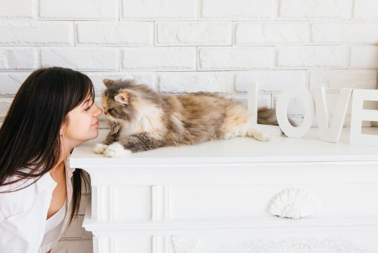 Fluffy beautiful cat and her young owner rubbing noses.