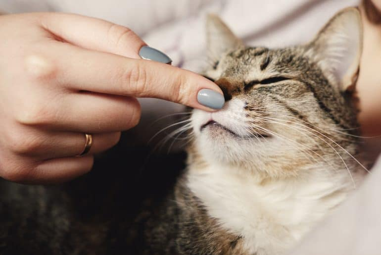 happy cat, owner is stroking the cat, cat sniffs the owner's finger