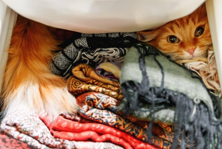 Cute ginger cat sitting on a pile of colorful scarfs in wardrobe.