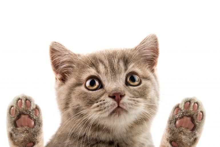 closeup muzzle kitten