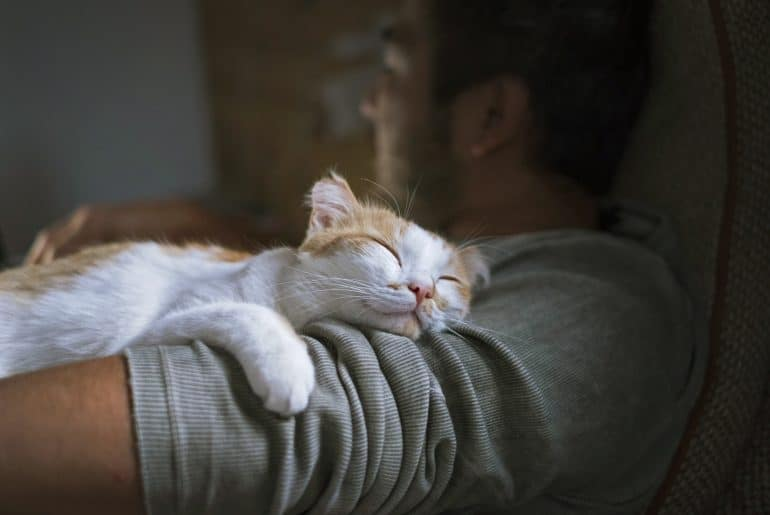 Cute smiling happy cat lying on the man's shoulder.