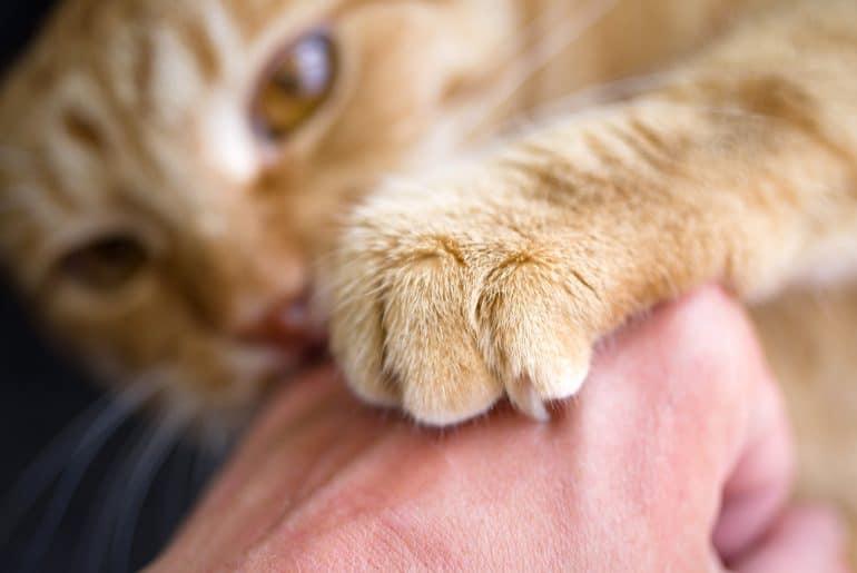 Red cat bites human hand, close-up