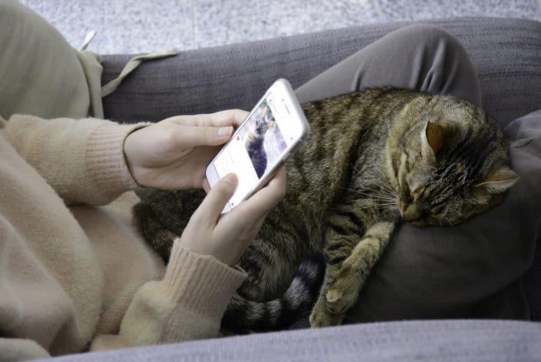 Sleeping satisfied tabby cat on lap.