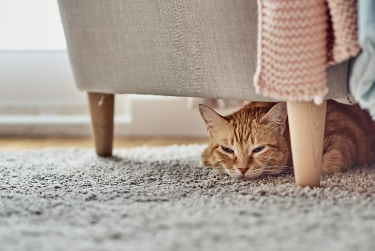 An orange cat lying under a sofa