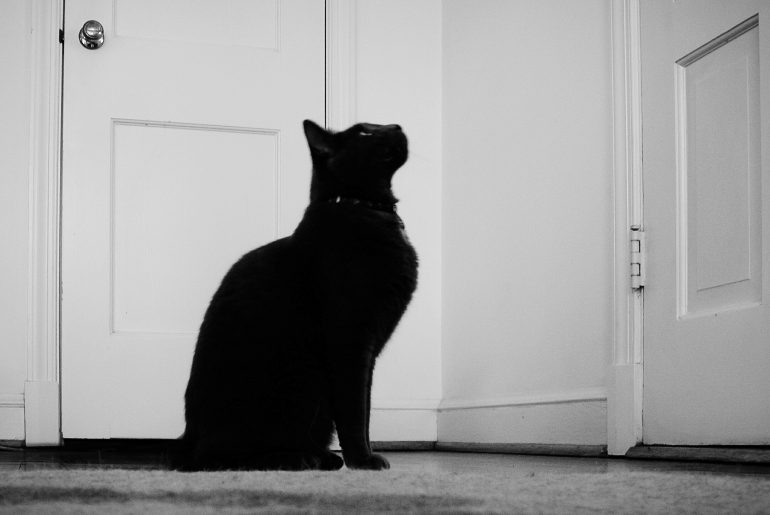 Side View Of Black Cat Sitting By Door Looking Up