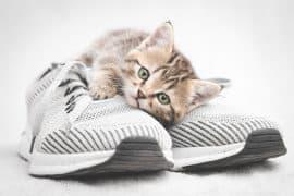 Cute tabby kitten lying on gray shoe