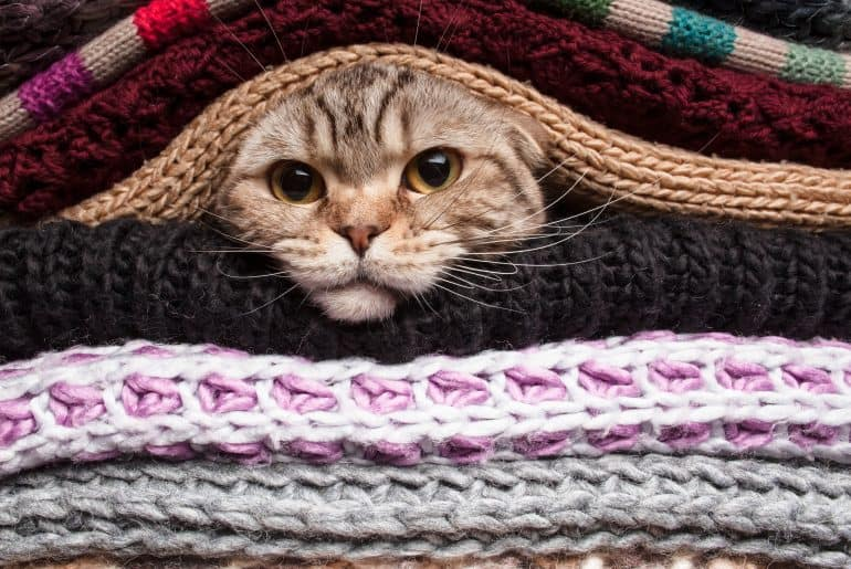 cat preparing for winter, wrapped up in a woolen clothes