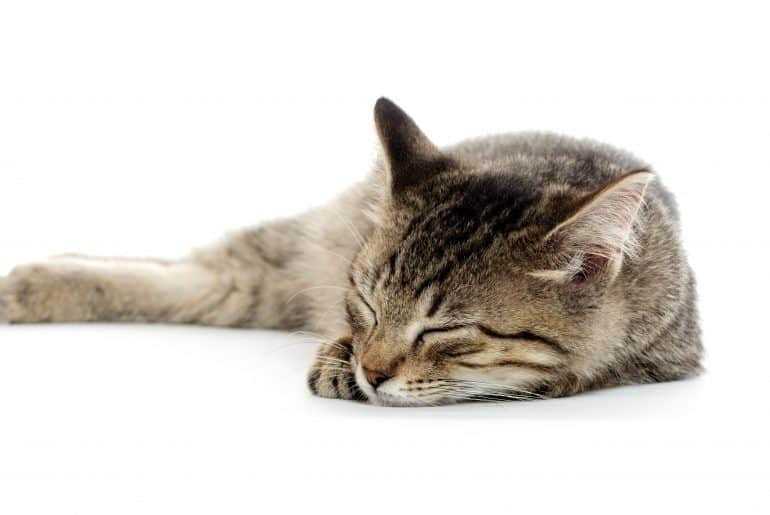Cute baby tabby kitten resting on white background