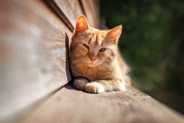 Young red kitten lying in the sun