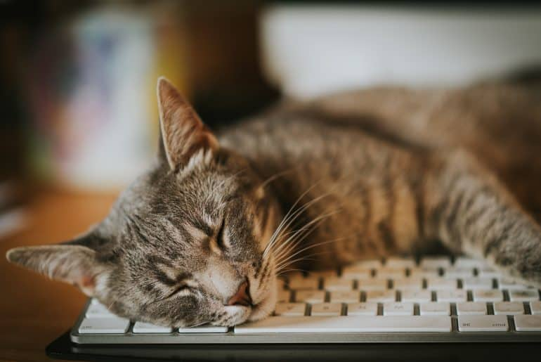 Cat sleeping on computer keyboard. Rest, resting, calm, relaxation, relax