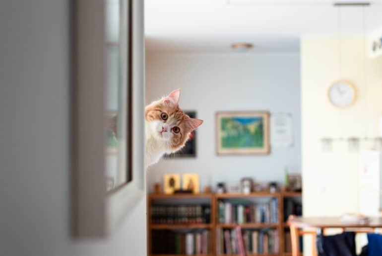 Funny ginger pussycat peeking around the corner.