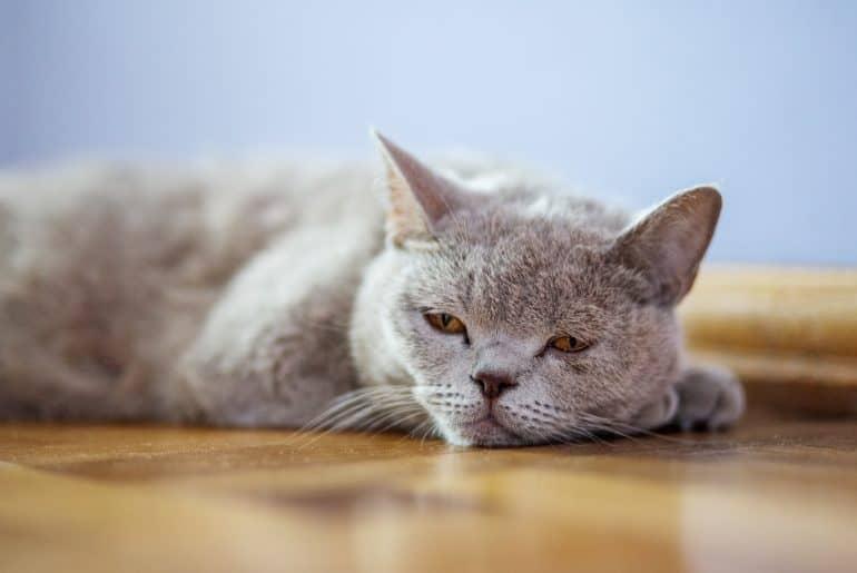 The cat lies on the floor.