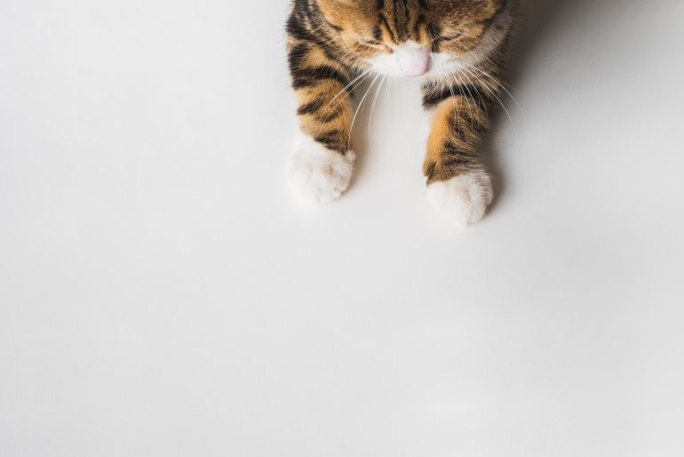 Little cute cat legs paw on white background