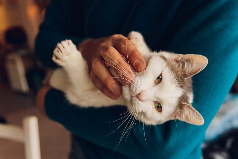 young man holding a white cat close-up