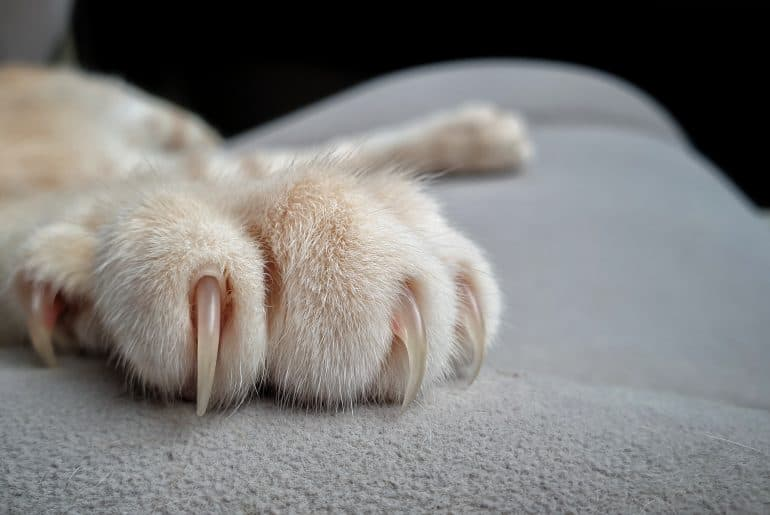 cat's paws with long and sharp claws on fabric sofa