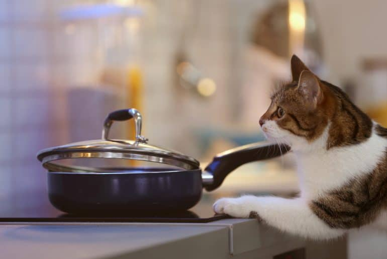 Cute funny cat and frying pan with tasty food in kitchen