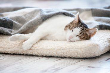 Cat sleeping at home