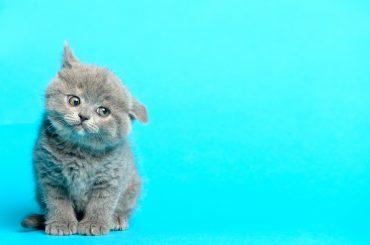 Cat blue background