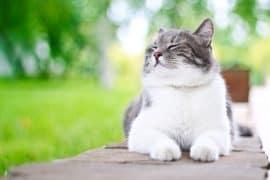 Cute cat enjoying himself outdoors