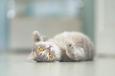 Cat Rests