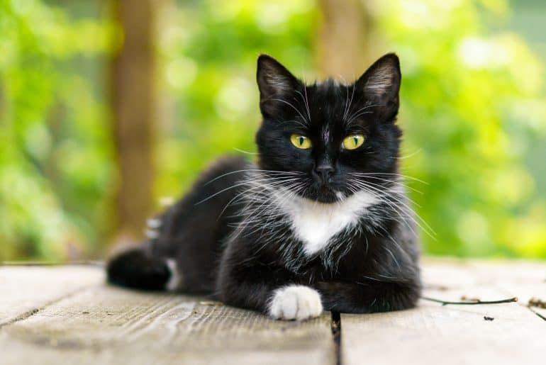 portrait of a black and white cat with green eyes