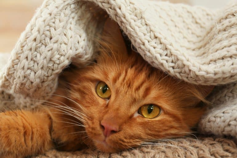 Adorable ginger cat under plaid at home. Cozy winter
