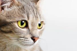 head cat close up