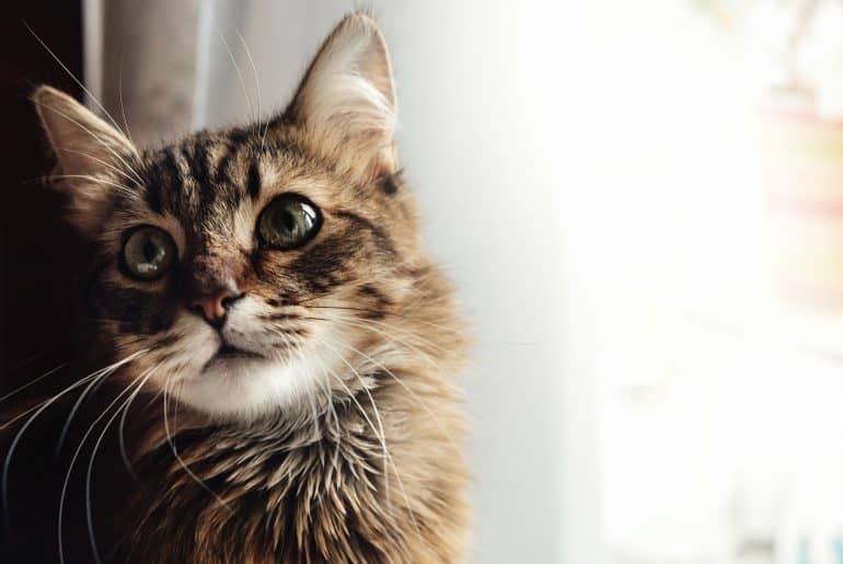 cute adorable sweet cat sitting with amazing wise look